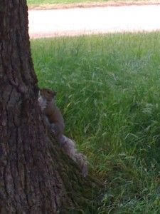 Squirrel in the park