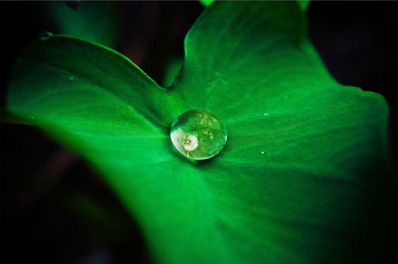 leaf-642115_1280